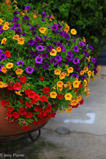 Gardenscapes Pictures by Flowers Garden Scapes Container Flowers Garden