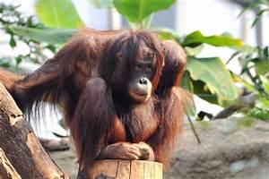 öffnungszeiten Zoo Rostock : das abenteuer ruft im zoo rostock mit darwineum 60plusminus ~ Eleganceandgraceweddings.com Haus und Dekorationen