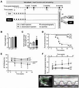 Effect Of Doxorubicin On Cardiac Function And Mortality