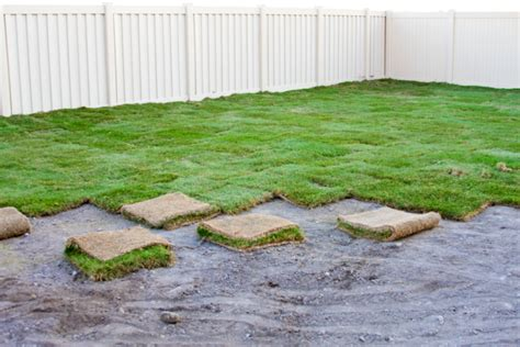 when to put sod tips for watering new sod harmony outdoor living