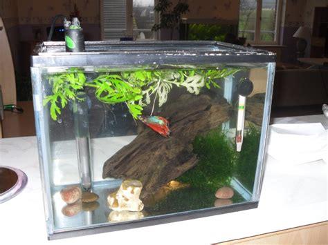 aquarium ideal pour combattant mon 1er aquarium pour betta