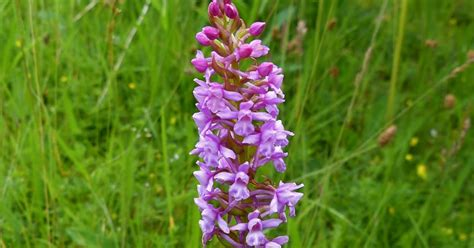 when are orchids in bloom a kilchoan diary orchids in full bloom