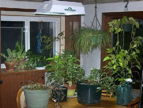 everything you need to about growing an indoor garden