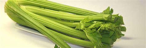 cuisiner celeri branche guide des légumes de saison à cuisiner en décembre