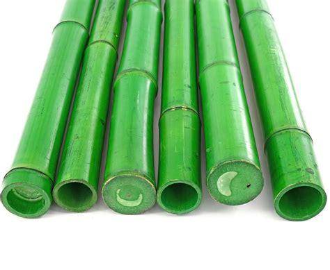 bambus gruen gefaerbt cm mit  bis cm guenstig bestellen