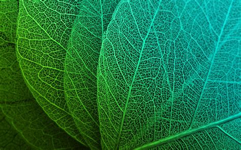 green leaves hd wallpapers hd wallpapers id