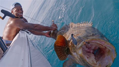 grouper goliath barrington sam catch blacktiph tyler verified