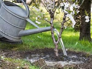 Schlanke Bäume Für Kleine Gärten : b ume f r kleine g rten das passt perfekt ans haus ~ Michelbontemps.com Haus und Dekorationen