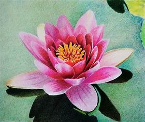 Water lily - Prismacolor Colored pencil - layering by f-a ...