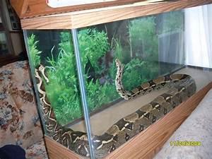 Large Snake Cage