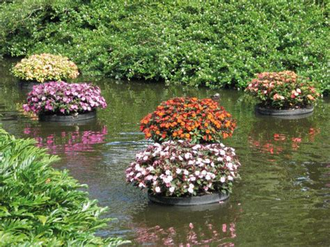 floating flower gardens tctimes