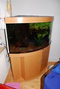Komplett Aquarium Kaufen : diskus verkaufen kleinanzeigen aquaristik kaufen verkaufen bei deinetierwelt ~ Eleganceandgraceweddings.com Haus und Dekorationen