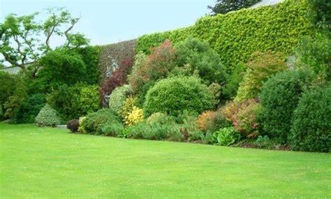 cespugli da giardino sempreverdi vivaio piante udine progettazione giardini udine