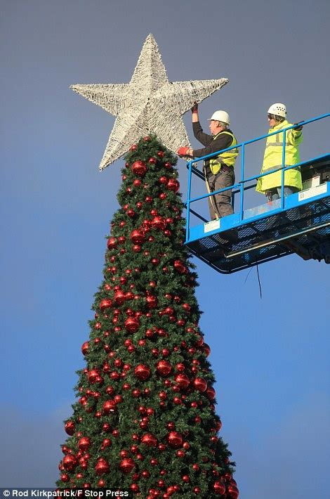 britain s largest christmas tree goes up in cheshire