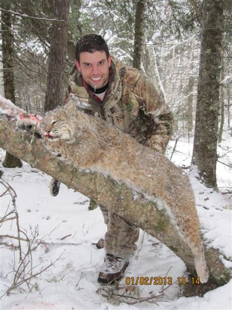 minnesota bobcat hunt pics    york hunting