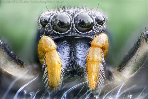 macro alternative portraits alberto ghizzi panizza
