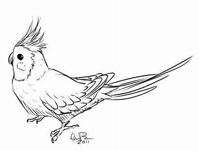 Cockatiel Coloring Bird Drawings Sketch Gloria Animal