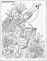 Realistic Coloring Pages Bird Tropical Adult Garden Printable Adults Rainforest Colouring Sheets Designlooter Realisticcoloringpages Drawings Animal Detailed Titan Posted Special sketch template