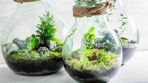 Terrarium Plante Deco : d corez votre maison avec une plante en terrarium ~ Dode.kayakingforconservation.com Idées de Décoration