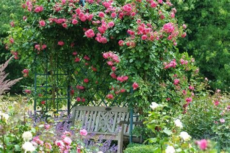 rosenbogen mit kletterrosen sorgt fuer mehr farbe und duft