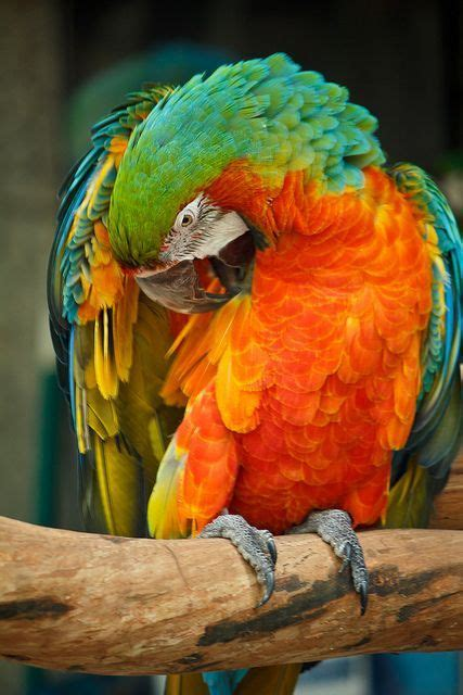 62 best Different types of Parrots images on Pinterest