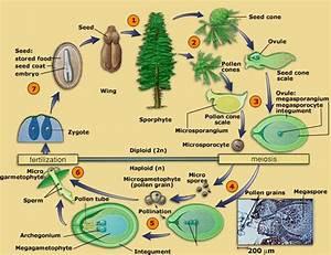 Biology For All  November 2012