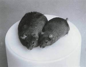Cloned Animals With Defects | www.pixshark.com - Images ...
