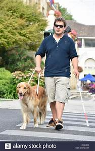 Blind Man Crossing The Street With Help Of Guide Dog Stock