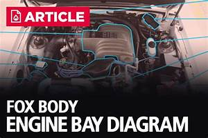 Fox Body Engine Bay Diagram  1986-1993