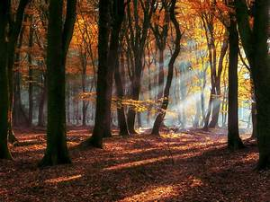 Morning, Autumn, Sun, Rays, Forest, Deciduous, Trees, With, Yellow