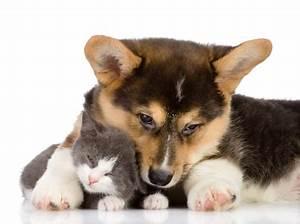 Hundehaare Vom Sofa Entfernen : tierhaare vom sofa couch oder polster entfernen ~ Bigdaddyawards.com Haus und Dekorationen