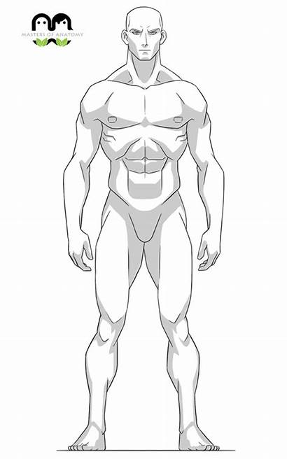 Anatomy Drawing Reference Character Sketches Masters Artists