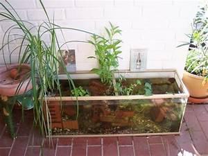 Teich Für Balkon : bepflanzung kleiner teich mein sch ner garten forum ~ Sanjose-hotels-ca.com Haus und Dekorationen