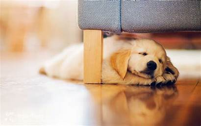 Dog Sleep Puppy Wallpapers Wallpaperup