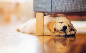 Dog Sleep Puppy wallpaper | 1920x1200 | 47108 | WallpaperUP