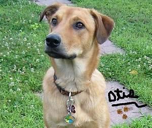 italian greyhound/ lab mix | bark | Pinterest | Lab mixes ...