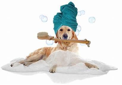 Spa Dog Grooming Transparent Spas Pet Dogs