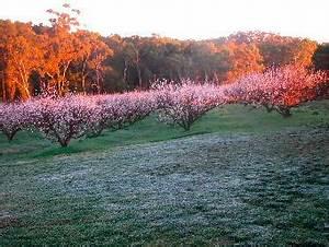 46_taralee_sunrise | Taralee Orchards