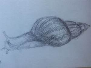 Snail pencil sketch by ashlin422 on DeviantArt