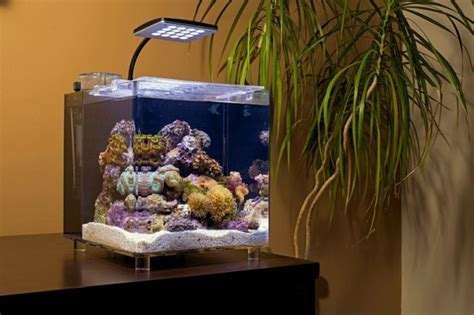 how to set up a tmc microhabitat 15 marine nano aquarium practical fishkeeping magazine