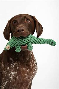 Jax & Bones Dinosaur Rope Dog Toy | Real dog, Toys and ...