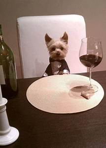 Cute Yorkie Puppy In Tuxedo At Table For Dinner Mans Best