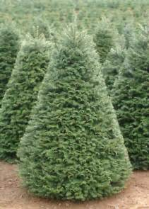 tel hi christmas tree sale tel hi