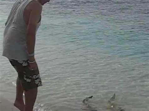 shark attack vilamendhoo maldives youtube