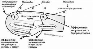 Памятка пациентам с артериальной гипертонией