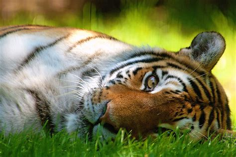 animal wallpapers hd animal images  friends