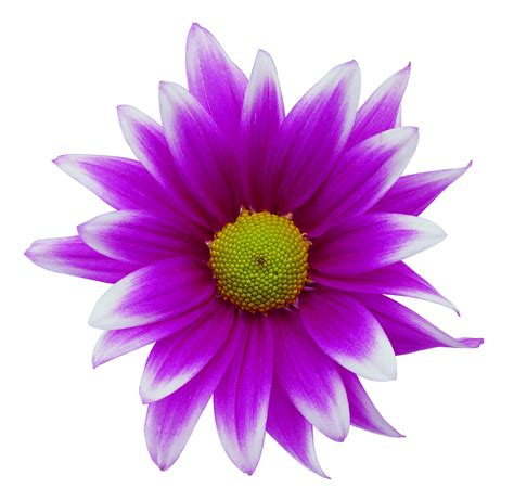 free pic of flowers flower images free cliparts co