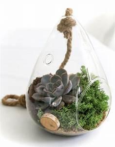Sukkulenten Im Glas : pflegeleichte zimmerpflanzen diy garten food und ~ Watch28wear.com Haus und Dekorationen