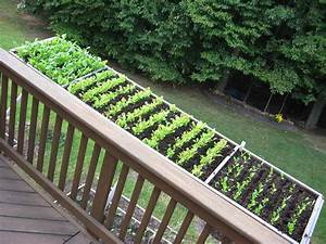 60, Best, Balcony, Vegetable, Garden, Ideas, 2020, Uk