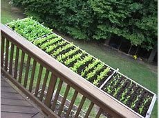 Cool container vegetable gardens University of Maryland